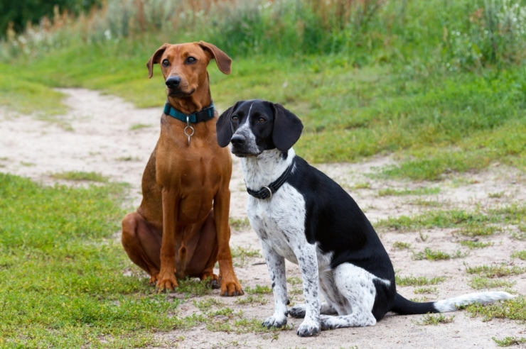 FOTO: APPI, KUI ÕUDNE - tänasel puugirohkel aastal kontrollige kindlasti ka koerte käpad üle