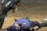 VIDEO: VAATA, MIDA see koer teeb, kui peremees kokku kukub