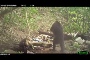 VIDEO: KAMP AHVE on leidnud tee kiviaega – varsti jõuavad inimestele järgi…