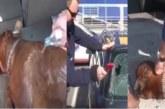 VIDEO: OH ÕUDUST – PAAR läks Ikeast kaupa ostma, jättes koera kuuma autosse