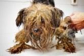VIDEO: KOLE LUGU – koer, kes elas kogu elu pimedas kastis…