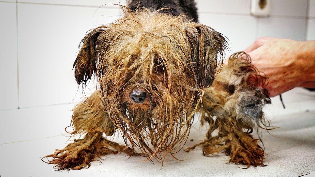 VIDEO: KOLE LUGU - koer, kes elas kogu elu pimedas kastis...