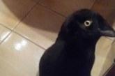 FOTOD: INTERNET KIHAB – Inimesed vaidlevad, kas pildil on kass või vares