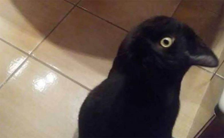 FOTOD: INTERNET KIHAB - Inimesed vaidlevad, kas pildil on kass või vares