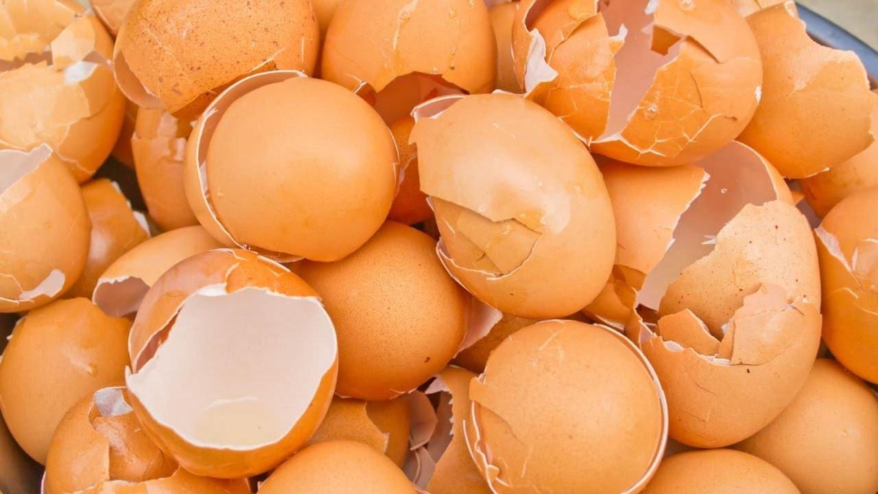 PEALE SELLE VIDEO vaatamist ei viska sa enam kunagi munakoori ära
