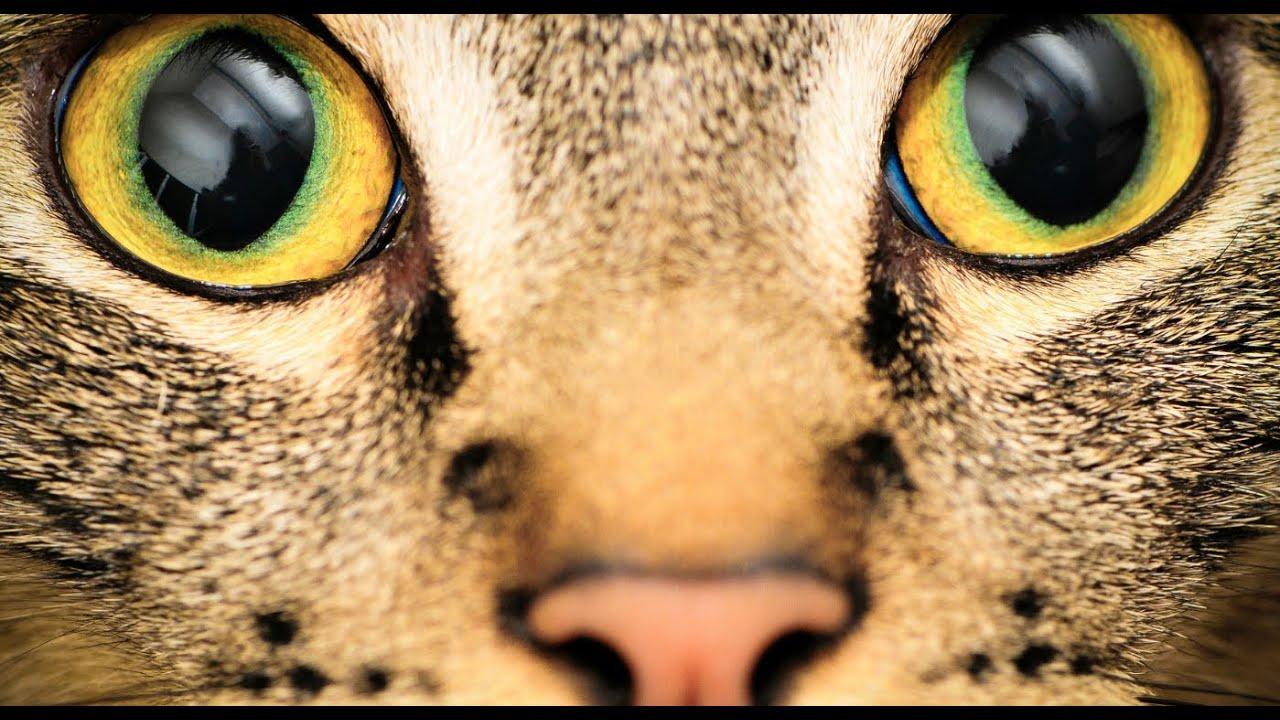 Video: Lahe! Vaata, kuidas kassid ja koerad sind tegelikult näevad