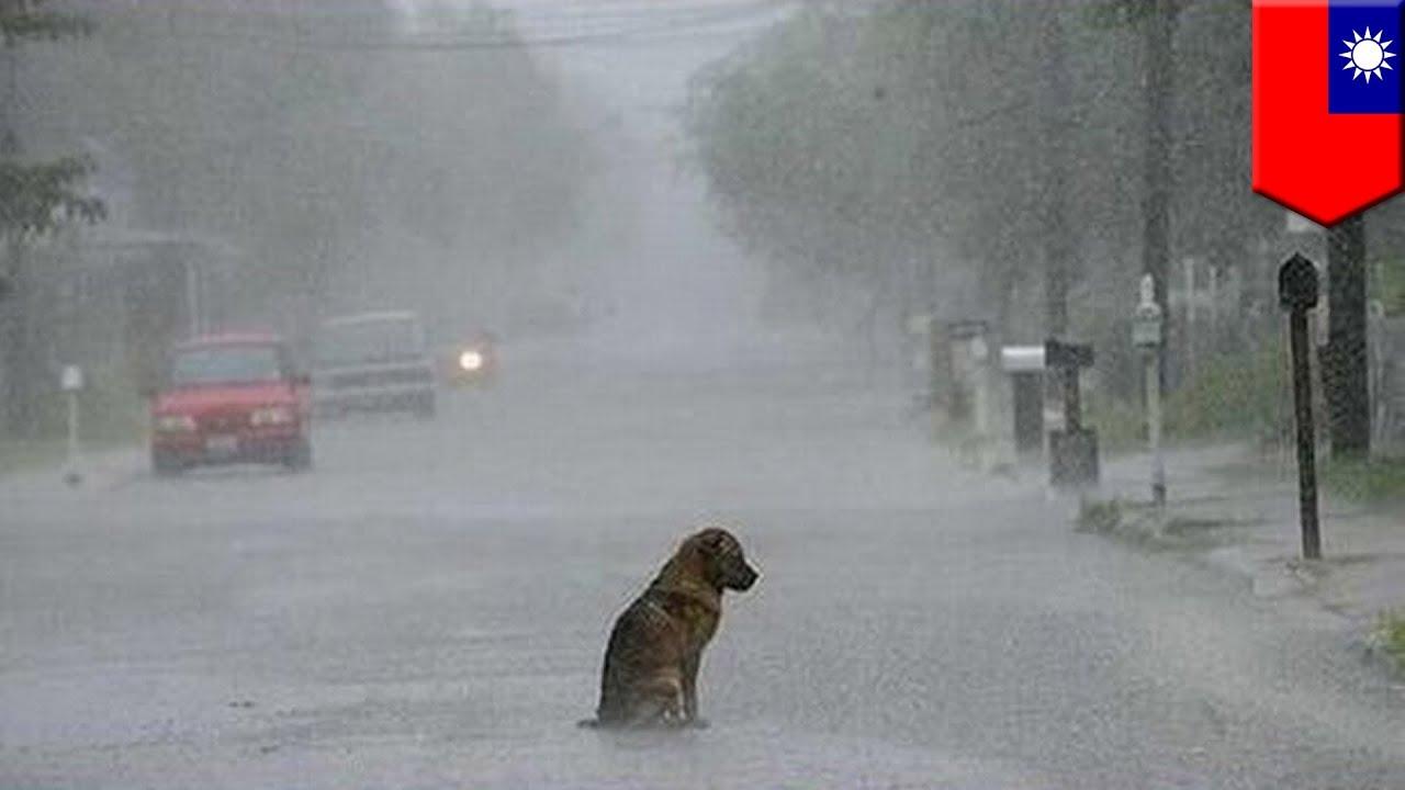 Ülikurb video koerast, kes ootas 2 aastat oma peremeest