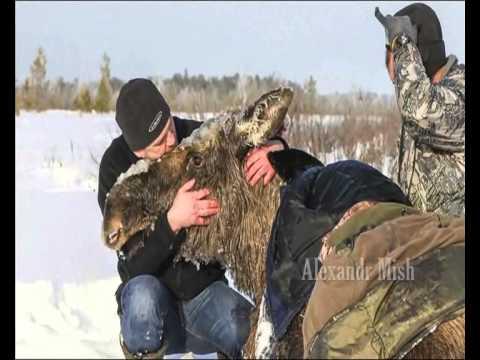 IMELISED INIMESED - video inimestest, kes päästavad loomi, pannes vahest ohtu ka ennast