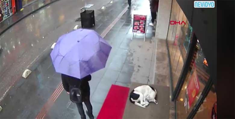 VIDEO: See naine sai hakkama kõige isetuma ja armsama teoga, mida inimene teha võiks