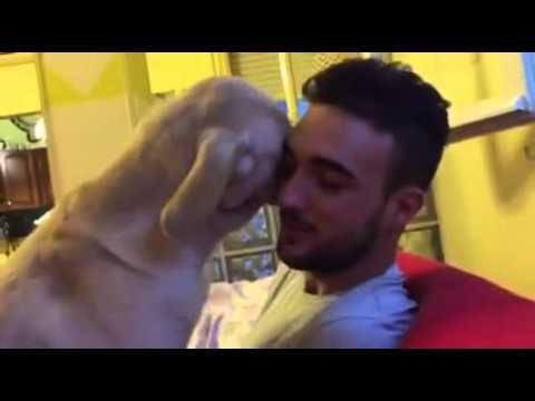 VIDEO: ERITI armas - vaata, kuidas koer andeks palub, kuna sai hakkama pahandusega