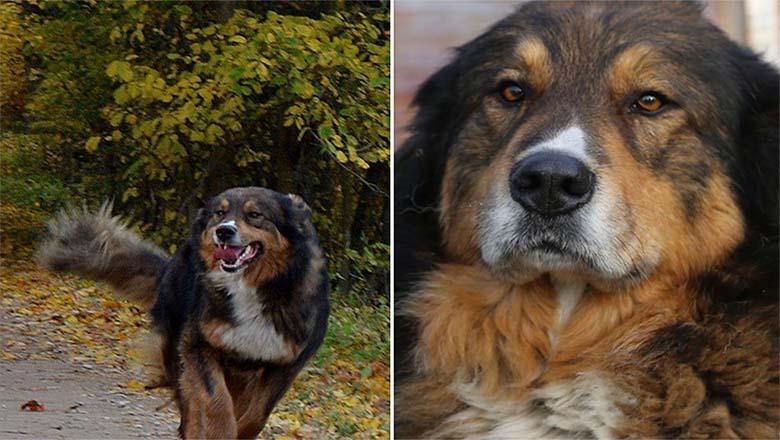 AITAME leida halastamatu mõrvari, kes tappis koera püssiga - KINDLASTI JAGAGE!
