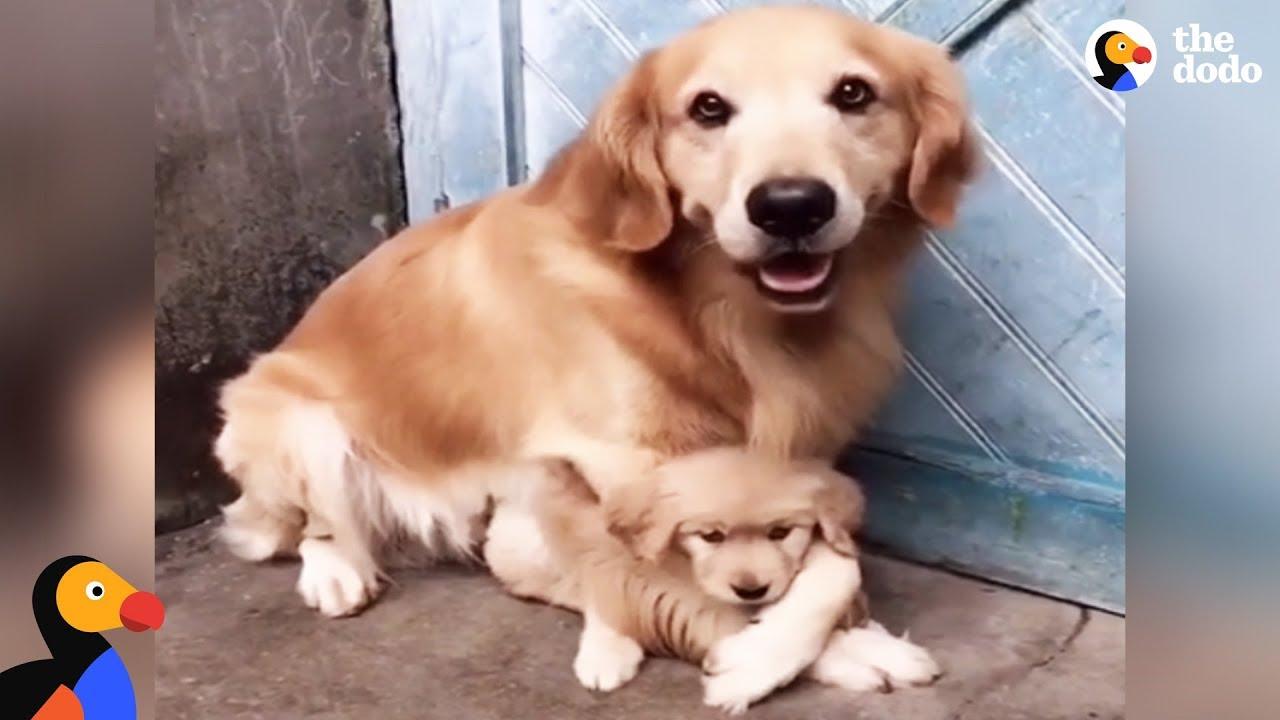 VIDEO: NII ARMAS - Koeraissi ei luba kellegil oma väikest koerabeebit puudutada