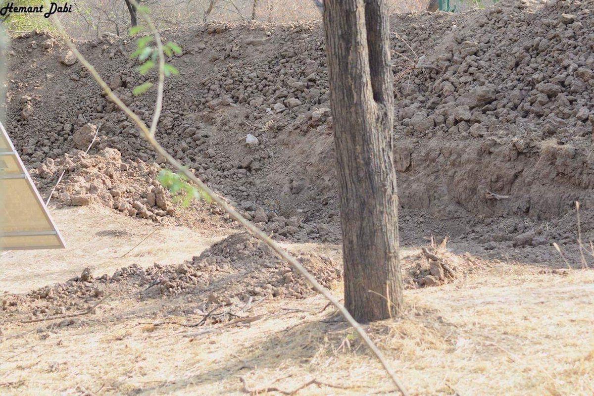 FOTO: Ebareaalne - kas suudad fotolt leida leopardi
