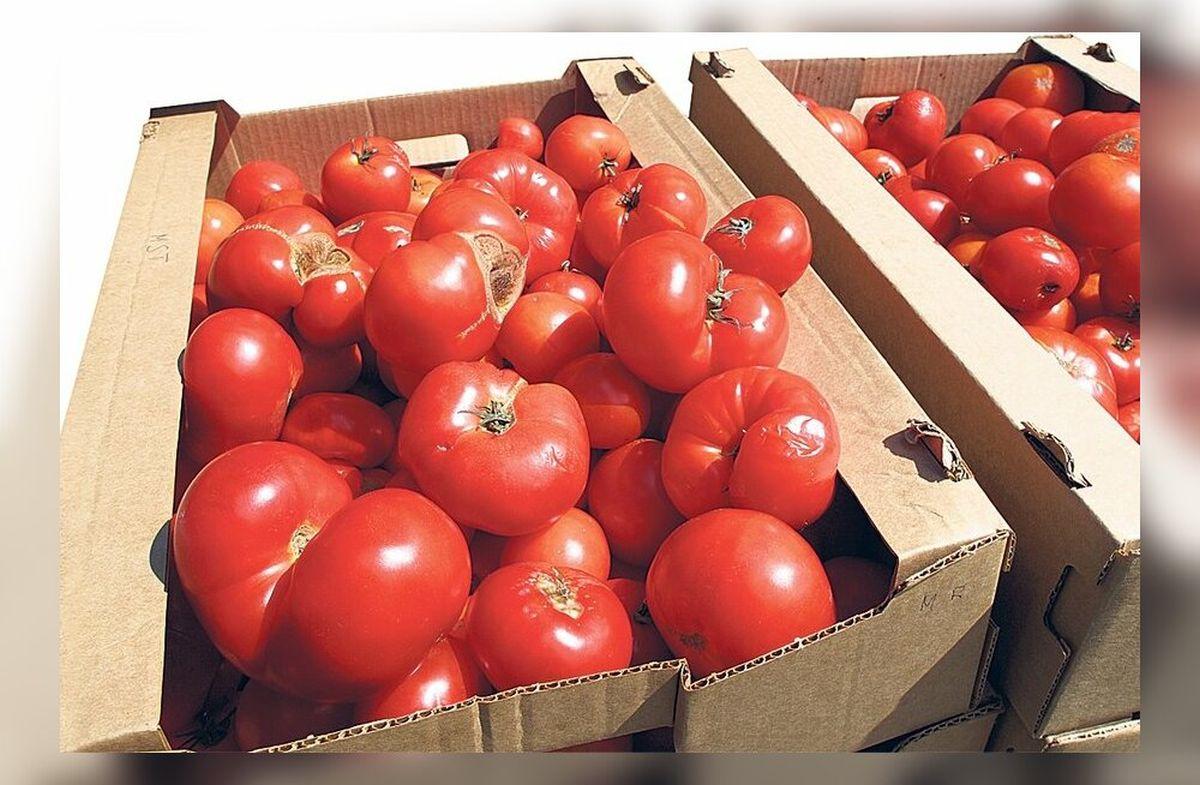 Maitsvate tomatite hooaeg läbi: tänasest tohib poodides müüa ainult plastmassimaitselisi tomateid