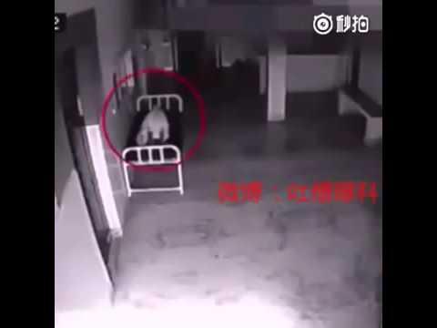 VIDEO:  Naine just suri haiglas. Mille valvekaamera jäädvustas, on hirmujudinaid tekitav!