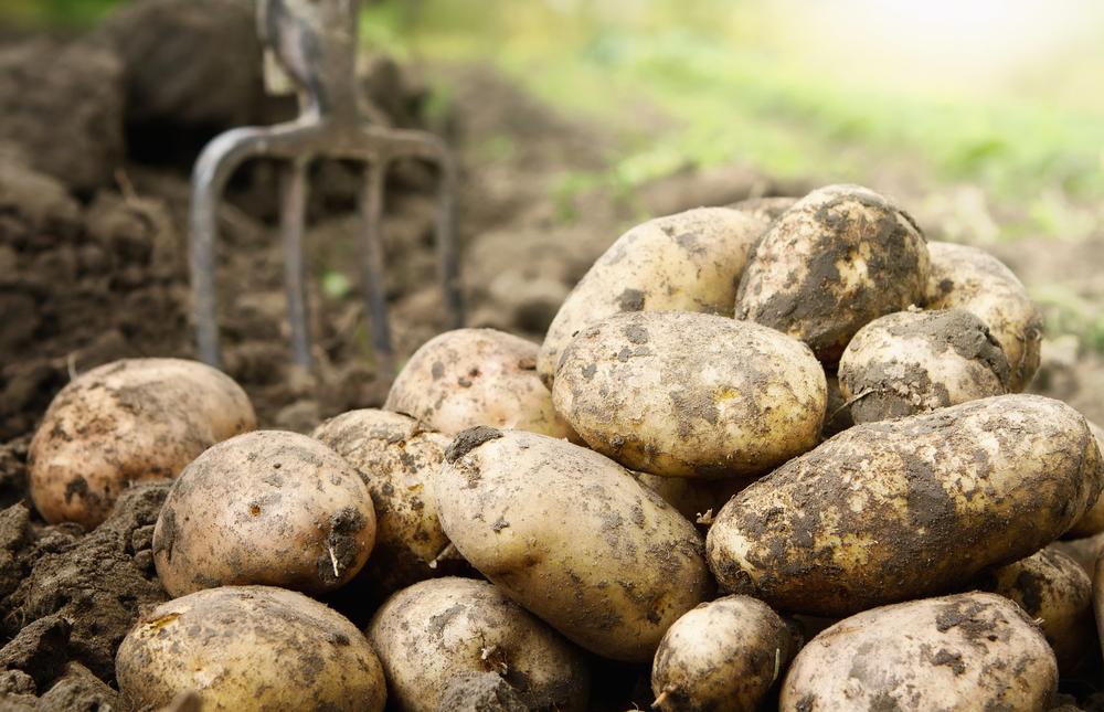 Vaata, kui palju hakkab nüüd Rimis maksma õhuke kilekott, kuhu saab puuvilju, kartuleid ja muid aiasaaduseid panna