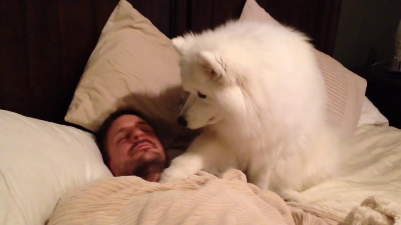 VIDEO: Tema sõbrad ei uskunud, et tema koer teeb NII igal hommikul… See filmiti tõestuseks!