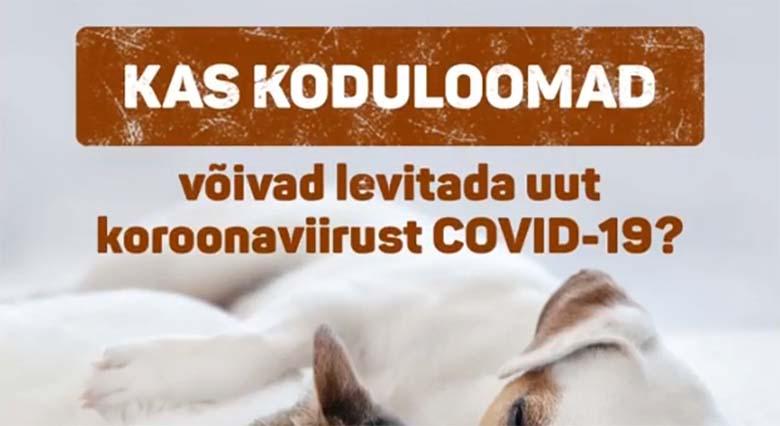 KASULIK TEADMINE: Kas koduloomad võivad levitada uut koroonaviirust COVID-19?