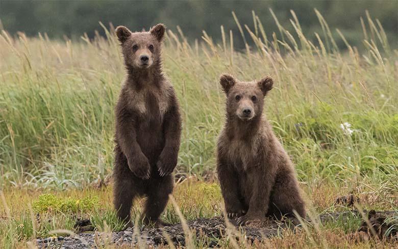 INTERVJUU HAABERSTI KARUGA – Karud ei olnudki eksinud, vaid olid linnas põhjusega