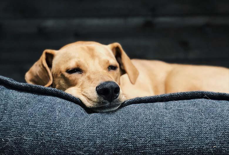 USKUMATU! Võõras koer käis vanaproua juures magamas - ta leidis kaelarihma küljest kirja