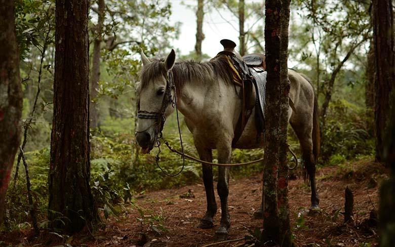 ANEKDOOT: HAHA – Hobune ronib puu otsa…