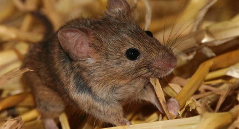 VIDEO: MISASJA – Eesti noormees, kes hammustab hiire pooleks ja närib seda
