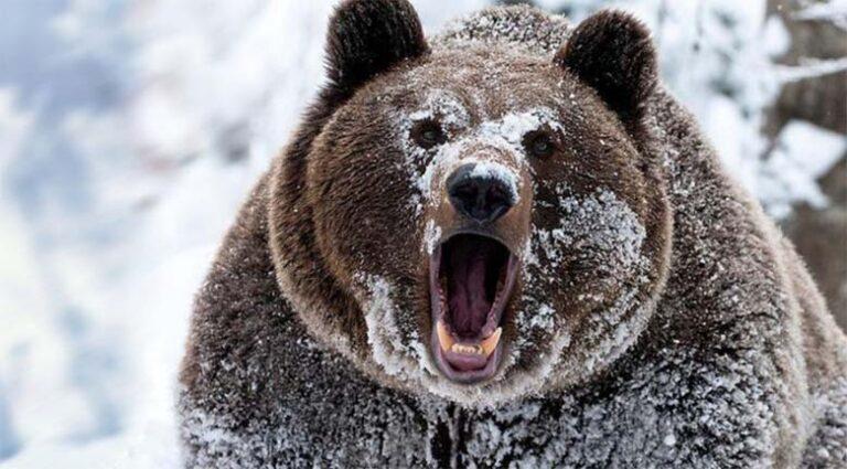 VIDEO: VÄGA hull olukord – karu ajab mäest laskuvat suusatajat taga…