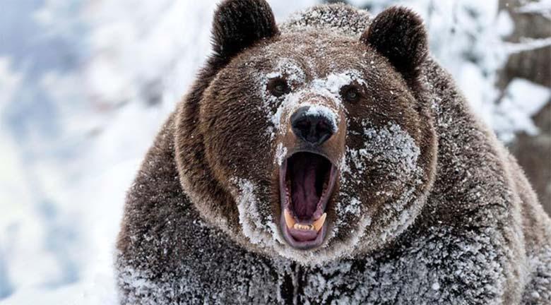 VIDEO: VÄGA hull olukord - karu ajab mäest laskuvat suusatajat taga...