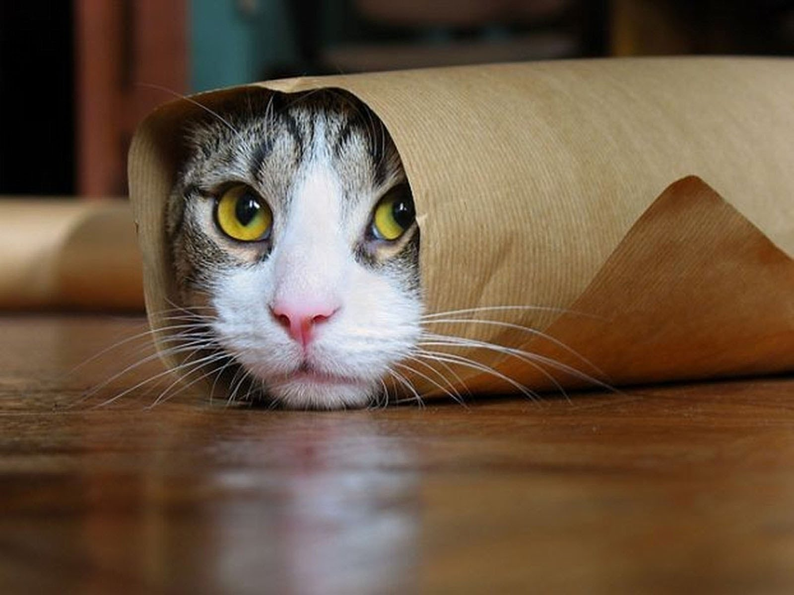 VIDEO: Sellised need kassid on. Valik naljakaid juhtumeid kassidega!
